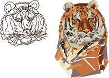 Tiger, portrait, black, colored, stylized, line, line drawing, geometric pattern. Portrait of a tiger linear and geometrical Stock Photos