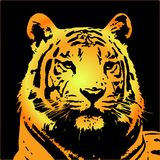 Tiger portrait� Royalty Free Stock Images