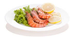 Tiger prawn stock photo