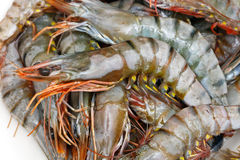 Tiger prawn Royalty Free Stock Images