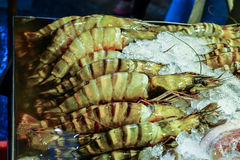 Tiger Prawn photographie stock