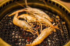 Tiger prawn on barbecue grill Stock Images
