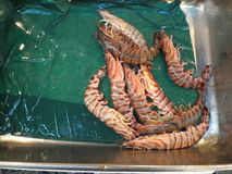 Tiger prawns Stock Photos