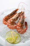 Tiger-prawns Stock Image