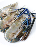of Tiger prawns Royalty Free Stock Image