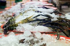Tiger Prawns. Big fresh tiger prawns on sell in  the market Royalty Free Stock Photography