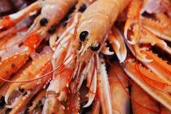 Tiger prawns Royalty Free Stock Image