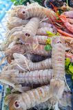 Tiger prawns in raw form. Seafood background Stock Photos