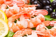 Tiger prawns on a skewer Stock Images