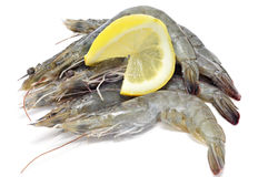 Tiger prawns. Some uncooked tiger prawns on a white background Royalty Free Stock Photography