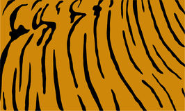 Tiger print. Black tiger print on orange Royalty Free Stock Image
