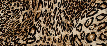 Tiger print fabric Stock Images