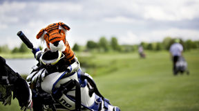 Tiger protection cap on golf club Royalty Free Stock Photography