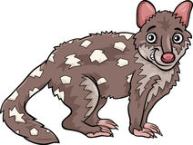 Tiger quoll animal cartoon illustration Stock Photos