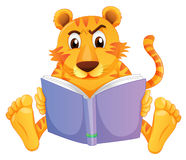 A tiger reading Royalty Free Stock Photo