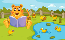 A tiger reading beside a pond with ducklings Royalty Free Stock Photography