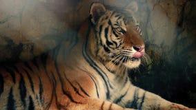 Tiger Relaxing In Dark Cave met Stralen van Zonlicht stock footage