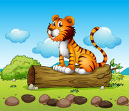 A tiger relaxing Royalty Free Stock Image