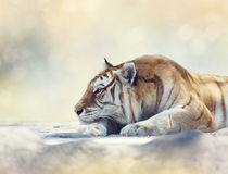 Tiger resting on a rock Royalty Free Stock Images