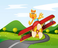 A tiger riding in a plane Royalty Free Stock Photography