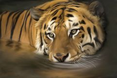 Tiger in the river Original royalty free illustration