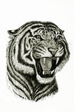 Tiger roar. Drawing of tiger roar portrait Royalty Free Stock Photo