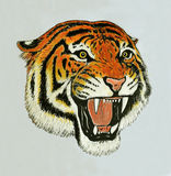 Tiger roar drawing. Portrait of tiger face roaring Royalty Free Stock Photography