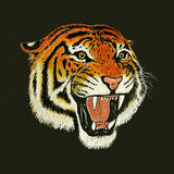 Tiger roar drawing. Portrait of tiger face roaring Stock Images