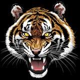 Tiger Roaring on Black Background. Beautiful Wild Tiger Portrait Roaring, on Black Background. Vector Illustration Copyright BluedarkArt stock illustration
