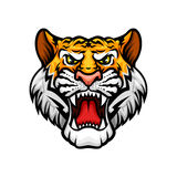 Tiger roaring head muzzle vector mascot icon. Black panther vector mascot icon. Roaring wild cat jaguar or leopard muzzle or snout with sharp canines jaw and Royalty Free Stock Images