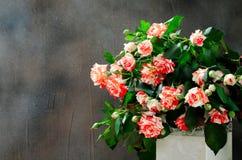 Tiger Roses, barrato Fiori in vaso bianco su fondo scuro, carta per il giorno di biglietti di S. Valentino, spazio della copia fotografie stock