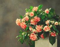 Tiger Roses, barrato Fiori in vaso bianco su fondo scuro, carta per il giorno di biglietti di S. Valentino, spazio della copia immagine stock libera da diritti