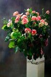 Tiger Roses, listrado Flores no vaso branco no fundo escuro, cartão para o dia de Valentim, espaço da cópia fotografia de stock royalty free