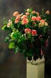 Tiger Roses, listrado Flores no vaso branco no fundo escuro, cartão para o dia de Valentim, espaço da cópia imagem de stock royalty free