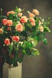Tiger Roses, rayado Flores en el florero blanco en el fondo oscuro, tarjeta para el día de tarjetas del día de San Valentín, espa Fotografía de archivo libre de regalías