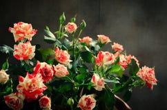 Tiger Roses, rayado Flores en el fondo oscuro, tarjeta para el día de tarjetas del día de San Valentín, espacio de la copia Imagen de archivo libre de regalías