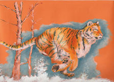 Tiger running. And it loves  freedom Royalty Free Stock Photography