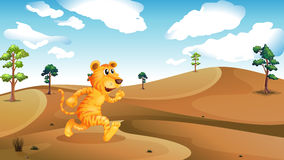 A tiger running in the desert Royalty Free Stock Photography