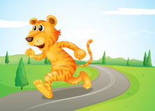 A tiger running in the street Stock Image
