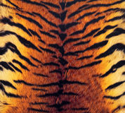 Tiger's skin background Stock Photography