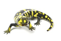 Tiger salamander. 3d render of tiger salamander Stock Image