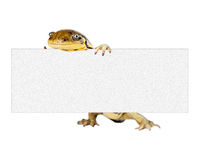 Tiger Salamander Holding Blank Sign Royalty Free Stock Photography