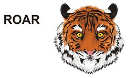Tiger say roar. Muzzle of tiger with black word roar Royalty Free Stock Photos