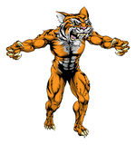 Tiger scary sports mascot. An illustration of a Tiger scary sports mascot with claws out Royalty Free Stock Photo