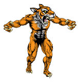 Tiger scary sports mascot Royalty Free Stock Photos
