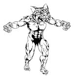 Tiger scary sports mascot. An illustration of a Tiger scary sports mascot with claws out Royalty Free Stock Photos
