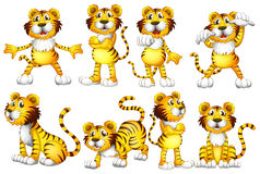 Tiger set Stock Image