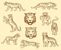 Tiger set royalty free stock images