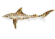Tiger Shark Photo stock