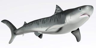 Tiger Shark auf Weiß Stockfotos